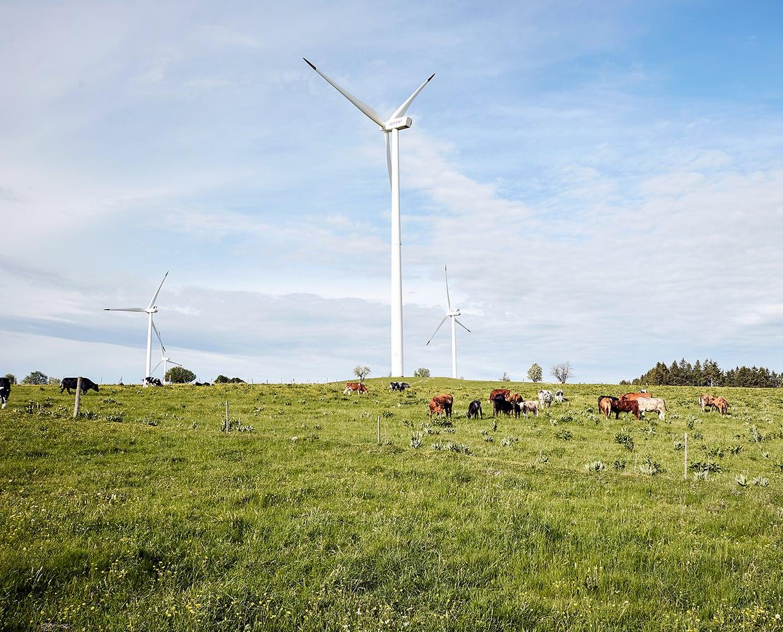 NachhaltigkeitVorschau-Naturbilder-mit-Tieren__M1E2176